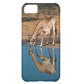 Giraffe (Giraffa Camelopardalis) Drinking Cover For iPhone 5C