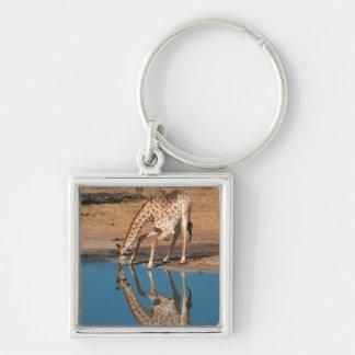 Giraffe (Giraffa Camelopardalis) Drinking Keychain