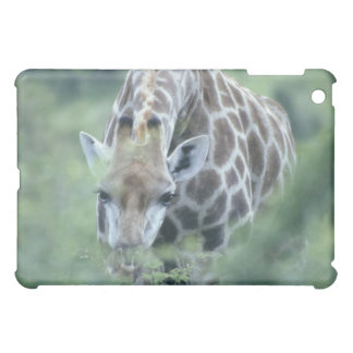 Giraffe (Giraffa camelopardalis) feeding on iPad Mini Cases