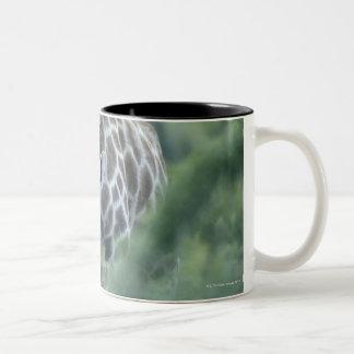 Giraffe (Giraffa camelopardalis) feeding on Two-Tone Coffee Mug