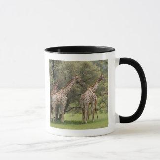 Giraffe, Giraffa camelopardalis, Kgalagadi 2 Mug
