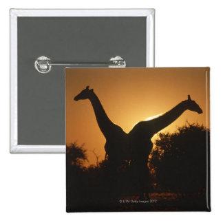 Giraffe (Giraffa camelopardalis) Pair Pinback Button