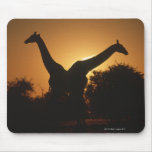 Giraffe (Giraffa camelopardalis) Pair Mouse Pad