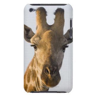Giraffe (Giraffa camelopardalis) portrait Barely There iPod Covers