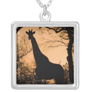 Giraffe (Giraffa camelopardalis) silhouette Square Pendant Necklace