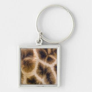 Giraffe (Giraffa Camelopardalis) Skin Keychain