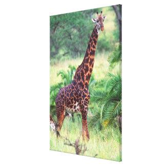 Giraffe, Giraffa camelopardalis, Tanzania Africa 2 Canvas Print