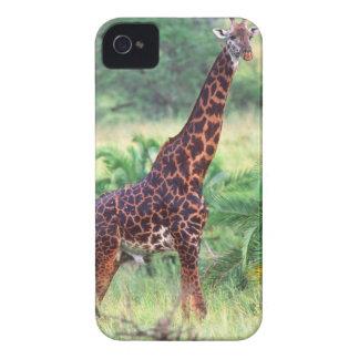 Giraffe, Giraffa camelopardalis, Tanzania Africa 2 Blackberry Case