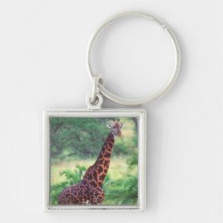 Giraffe, Giraffa camelopardalis, Tanzania Africa 2 Keychain