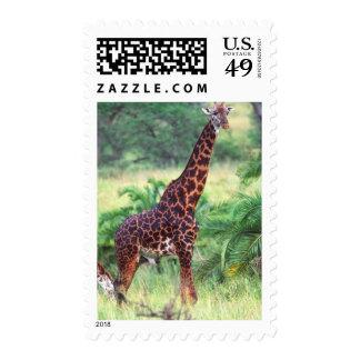Giraffe, Giraffa camelopardalis, Tanzania Africa 2 Postage