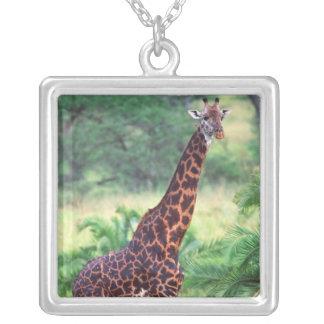 Giraffe, Giraffa camelopardalis, Tanzania Africa 2 Square Pendant Necklace