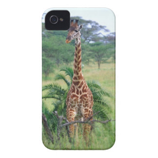 Giraffe, Giraffa camelopardalis, Tanzania Africa Blackberry Bold Covers