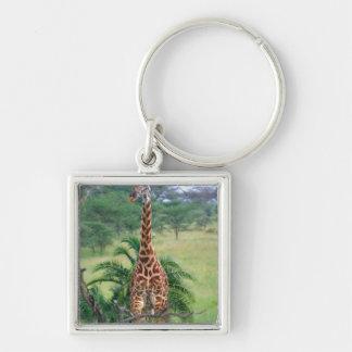 Giraffe, Giraffa camelopardalis, Tanzania Africa Keychain