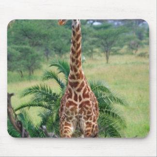 Giraffe, Giraffa camelopardalis, Tanzania Africa Mouse Pad
