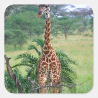 Giraffe, Giraffa camelopardalis, Tanzania Africa Stickers