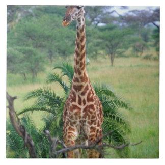 Giraffe, Giraffa camelopardalis, Tanzania Africa Tile