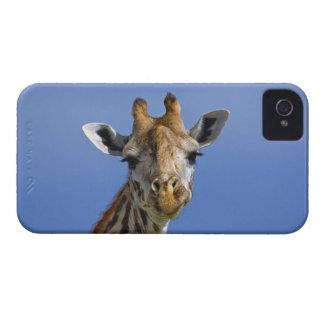Giraffe, Giraffa camelopardalis tippelskirchi, iPhone 4 Case