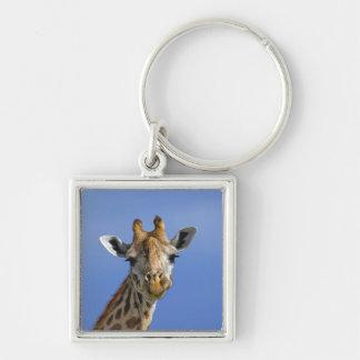 Giraffe, Giraffa camelopardalis tippelskirchi, Keychain