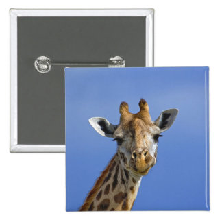 Giraffe, Giraffa camelopardalis tippelskirchi, Pinback Button