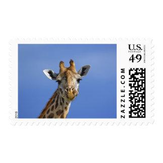 Giraffe, Giraffa camelopardalis tippelskirchi, Postage Stamp