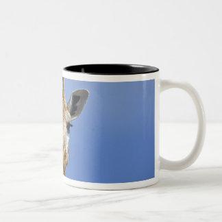 Giraffe, Giraffa camelopardalis tippelskirchi, Two-Tone Coffee Mug