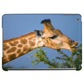 Giraffe (Giraffe Camelopardalis) Feeding Cover For iPad Air