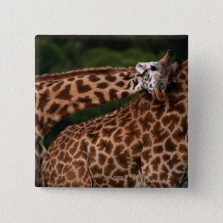Giraffe (Giraffe camelopardalis tippleskirchi) Button