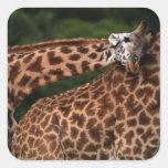 Giraffe (Giraffe camelopardalis tippleskirchi) Square Sticker