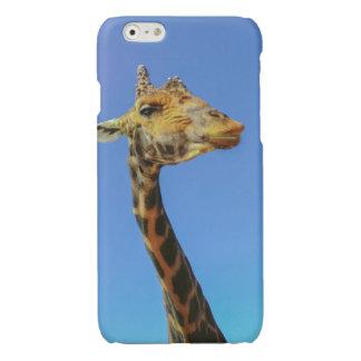 Giraffe Glossy iPhone 6 Case