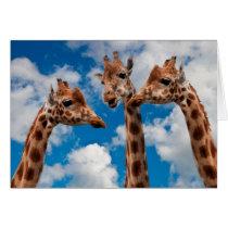 Giraffe Gossip Girls