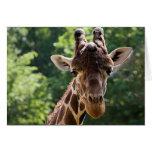 Giraffe • Greeting Card