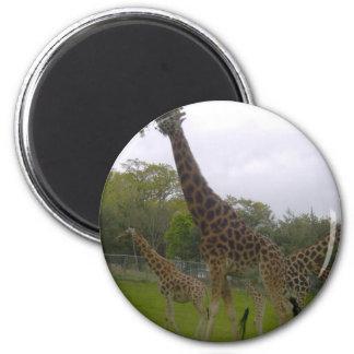 Giraffe group magnet