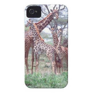 Giraffe Group or Herd w/ Young, Giraffa Blackberry Bold Covers