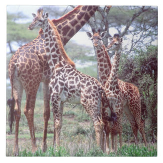 Giraffe Group or Herd w/ Young, Giraffa Ceramic Tile