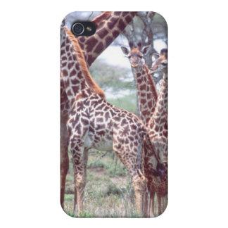 Giraffe Group or Herd w/ Young, Giraffa Covers For iPhone 4