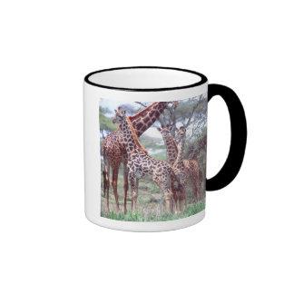 Giraffe Group or Herd w/ Young, Giraffa Ringer Coffee Mug