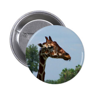 Giraffe head against blue sky photograph picture pins