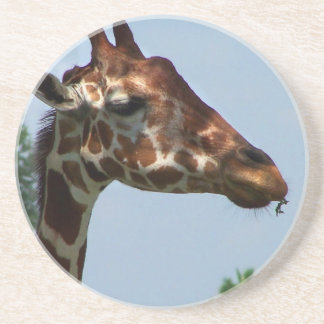 Giraffe head against blue sky photograph picture beverage coaster