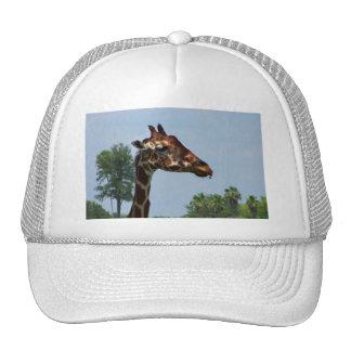 Giraffe head against blue sky photograph picture mesh hats
