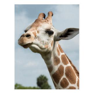 Giraffe Head Among the Clouds Postcard