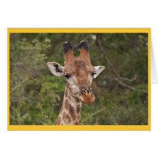 Giraffe head closeup greeting card