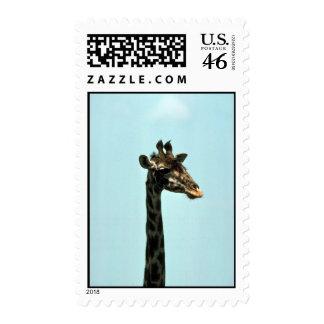 Giraffe - Head Shot Stamp