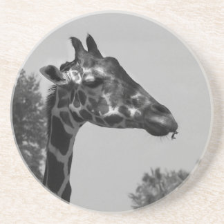 Giraffe head with plants and sky photograph coaster