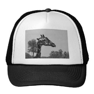 Giraffe head with plants and sky photograph hat