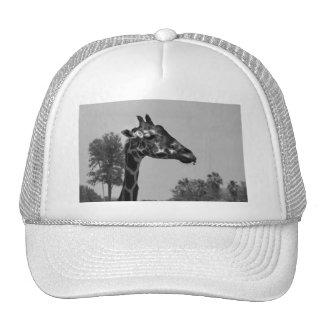 Giraffe head with plants and sky photograph hats