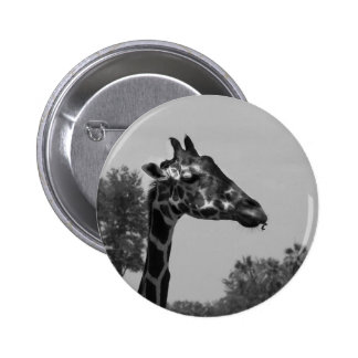 Giraffe head with plants and sky photograph pinback button