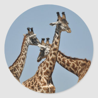 Giraffe Heads Sticker