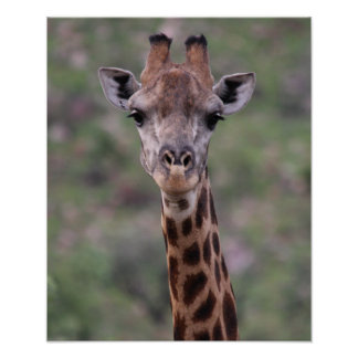 Giraffe Headshot Poster