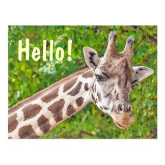 Giraffe - Hello Postcard