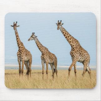 Giraffe Herd in Grassland Mouse Pad